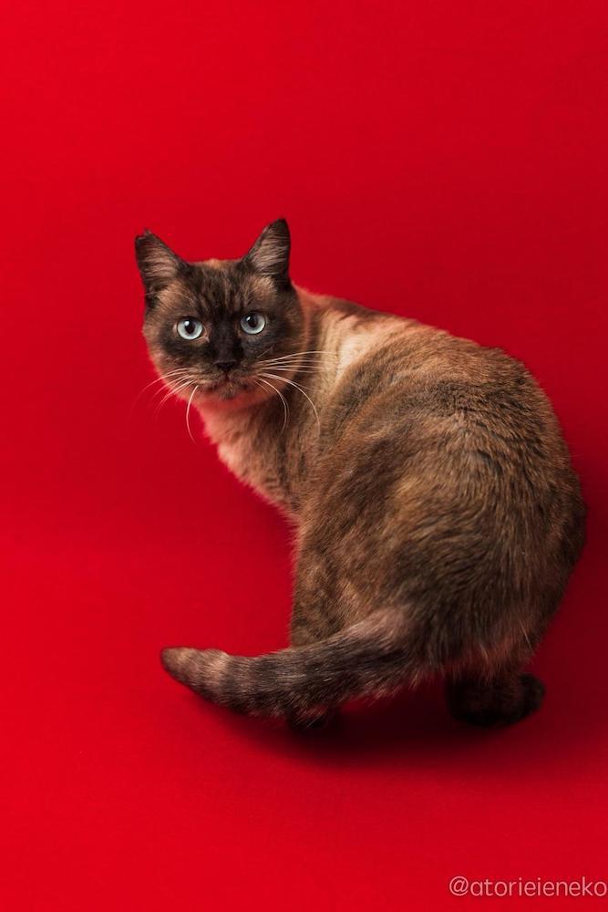 保護猫の「ココア」