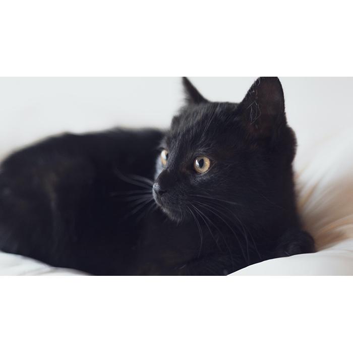 黒ネコチャァン